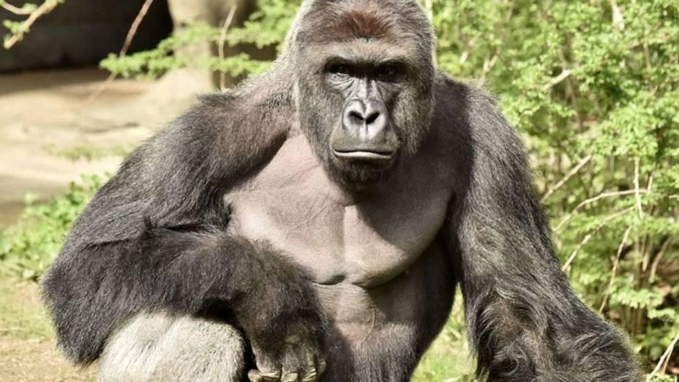Gorilla vs. Mother: Critical Commentary